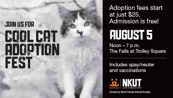 Cool Cat Adoption Fest advertisement