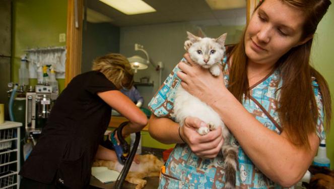 Vet tech holding a spayed cat
