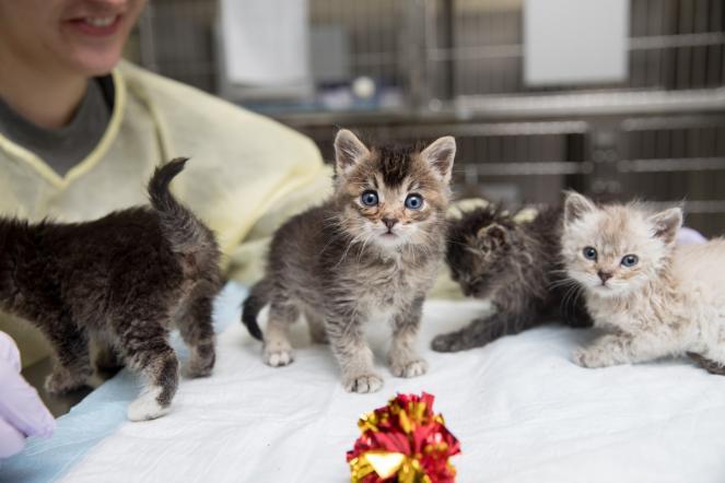 Kitten Nursery story