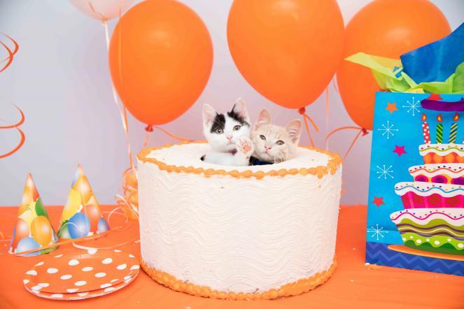 Kittens & Cake 5th Anniversary