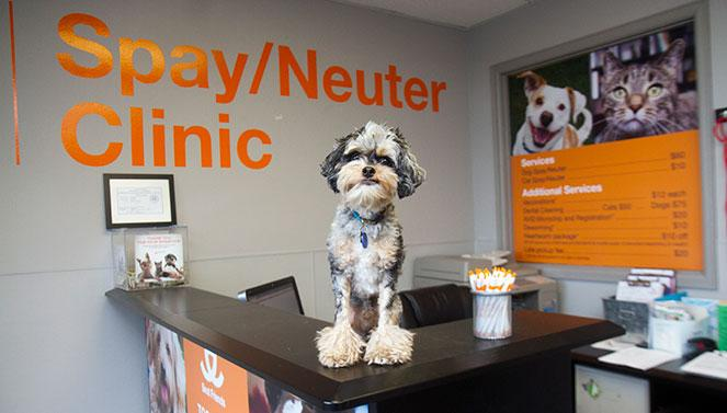 Spay Neuter Clinic in Orem, UT