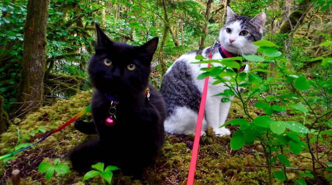 Adventure Pets