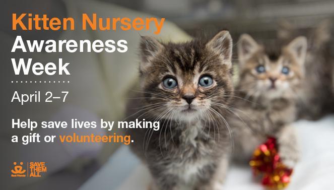 Kitten Nursery Awareness Week Best Friends Animal Society Utah