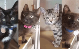 Kittens with FeLV