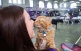 Adoptable cat
