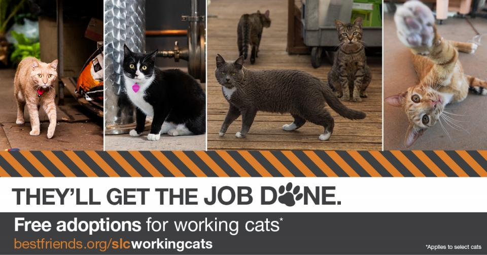 working cats